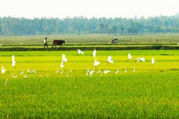 Phát triển du lịch nông thôn, Kinh nghiệm thế giới và áp dụng vào Việt Nam