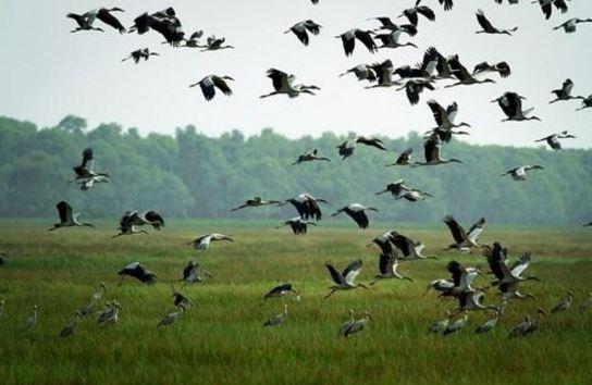 Tham quan vườn quốc gia Tràm Chim nghỉ chân tại Khách sạn Huỳnh Đức